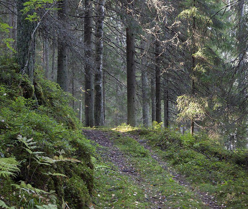 Luonnonsuojelualueet monimuotoisuuden asialla