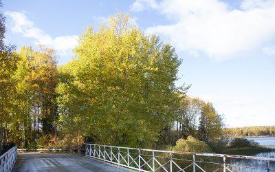 Petäjäveden luonnonsuojelualueet: Kutomakoulun niemi