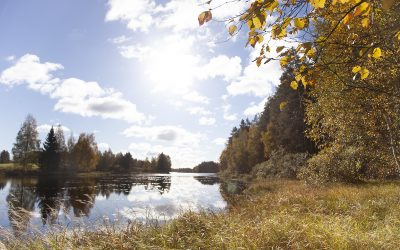 Petäjäveden luonnonsuojelualueet: Solikkosaari
