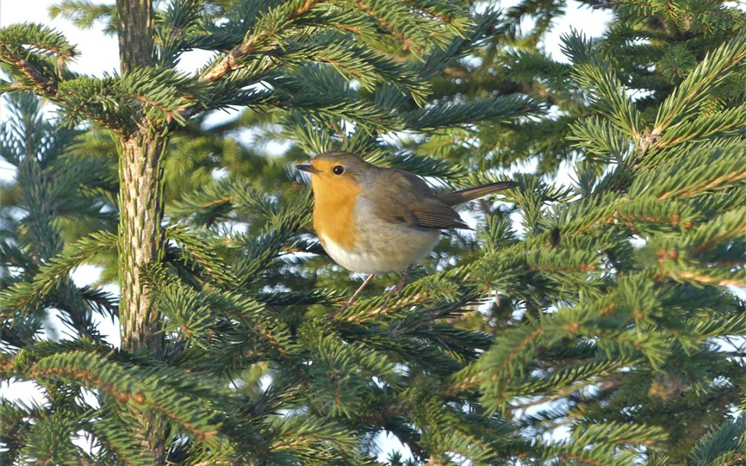 Lintujen kevätmuutto alkoi vilkkaana