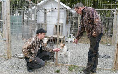 Kiinnostus koiriin perintönä